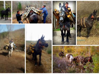 Pignola: raccolta differenziata del vetro a dorso di mulo